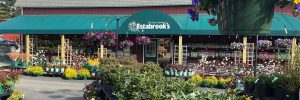 Estabrook's