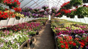 Mountain Greenery Greenhouses