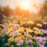 Summer Garden Series