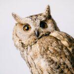 Maine Beer Company – Center for Wildlife Animal Ambassadors
