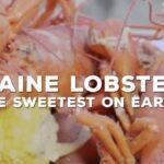 Maine Lobster Week
